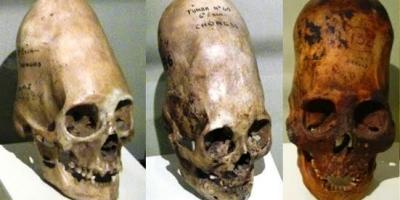 What do you think of Homo Capensis?