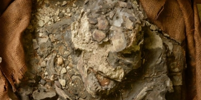 "Extraordinary 6,500-Year-Old ""Noah"" Skeleton Re-Discovered -"