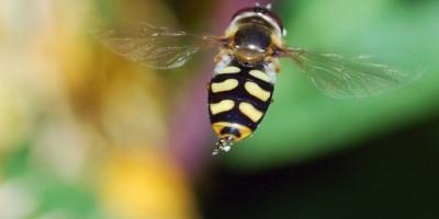 Drugged Bees Still Find Their Way Home!