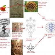 Flower of life, tree of life, garden of eden, kabbalist tree of knowledge, fleur de lis, Apple