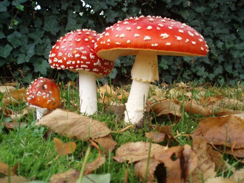 Priest Robes & Mushrooms