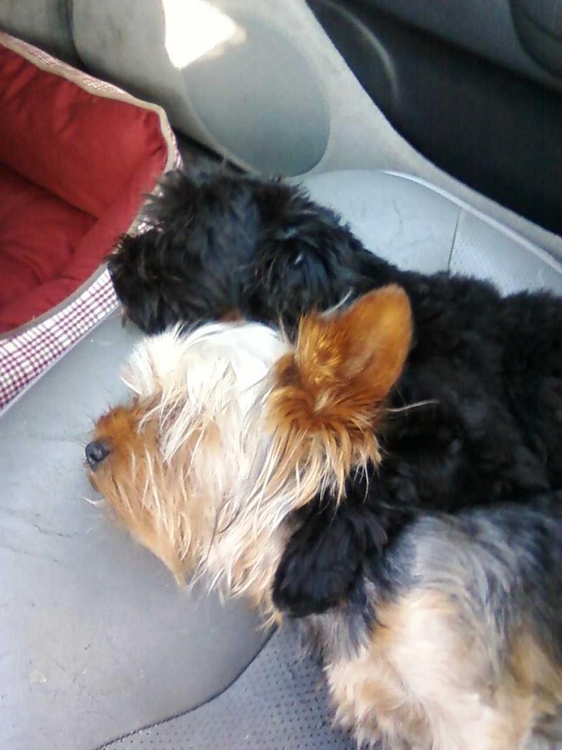 Tarheel's  2 Puppies!