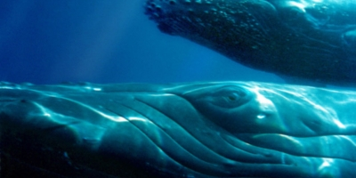 MESSAGES FROM THE WHALES / These are Messages directly from