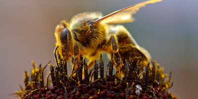 How Mushrooms Can Save Bees & Our Food Supply/ video